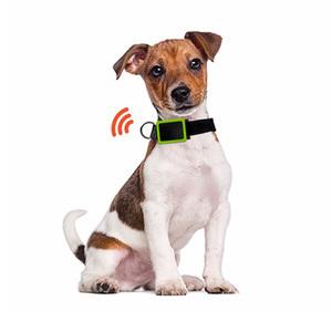 Balise GPS pour animaux Noir