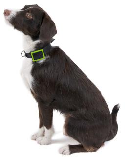 Collier GPS Weenect Pets pour chien